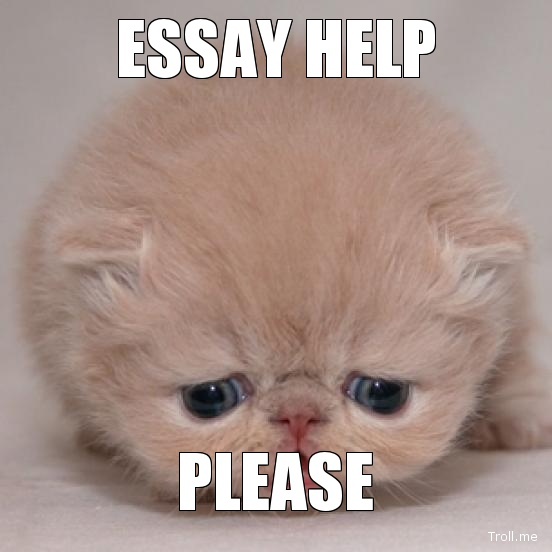 Help me write my college essay  Essay Writing Service